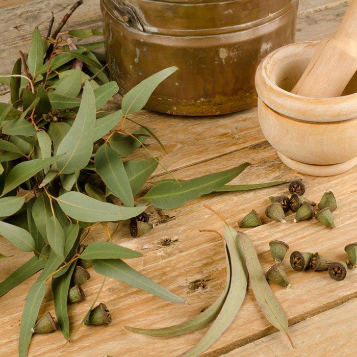 Eucalyptus Essential Oil for Headaches